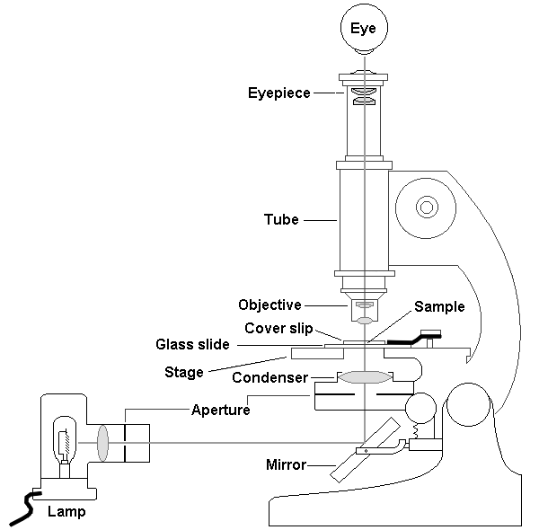 Lecture 1 intro to em for biologists electron microscope unit diagram of a light microscope ccuart